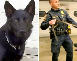 Burglars Shoot Homeowner In The Face, Newly Trained K9 Jumps In To Save The Day