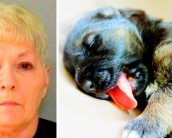 Dog-Hater Shoots Puppy, Shoots Neighbor Too For Letting Puppy Play Without Leash