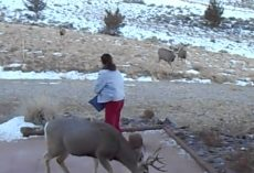 Wild Deer Swarm From All Over To Eat When Woman Calls Out For Them