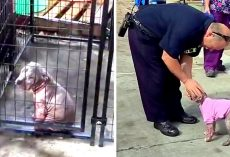 Fireman Visits Severely Abused Pup He Had Saved, Pup Clings To Him & Won't Let Go