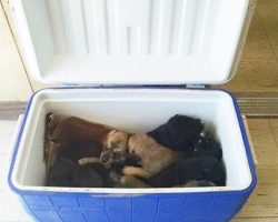 Woman Pulls Over For Cooler On The Road And Finds 9 Puppies Inside