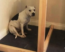 """Dad Builds A Very """"Special Solution"""" For His Rescue Dog Overwhelmed By Anxiety"""