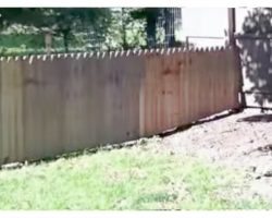 "Dad Proudly Built A Fence To Protect His Dog, Dog Hilariously ""Tested It"" Out"