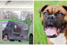 Family Watches UPS Truck Run Over Their Dog, Backup Over Him & Drive Away