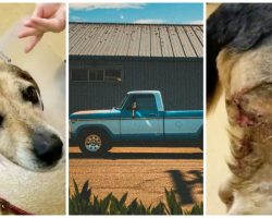 Owner Ties Beagle To Rope, Ties Rope To Truck & Steps On Gas Pedal