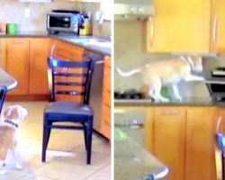 Dog Made 'Outrageous' Plan To Steal Chicken Nuggets, Got Caught Red-Handed