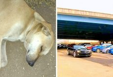 Psycho Throws Dog Off A 30ft Overpass, Dog Found Bleeding From Mouth On Impact