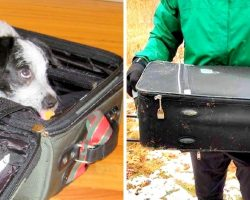 Rotten Owner Packs Unwanted Dog In A Suitcase & Throws Her Down A Snowy Hill