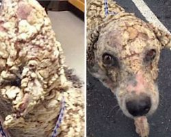 "Dumped Dog With Potato Chip-Like Scales Looked ""Unrecognizable"" After He Was Rescued"