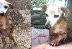 Man Rescues Old Dog From Freeway, But His Wife Tells Him They Can't Keep It