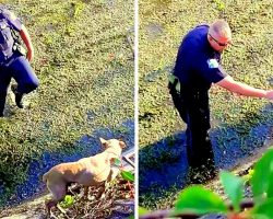 Cop Climbs Down Steep Canal Wall To Save Injured Dog Stranded In The Bog For Days