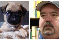 Dog Dad Wants Others To Learn From Mistake That Cost New Puppy His Life