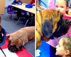 Elementary Kids Get Stronger By Sharing Daily Struggles With 200lb Therapy Dog