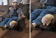Grandpa Takes Dog To Furniture Store To Make Sure She Approves Of New Chair