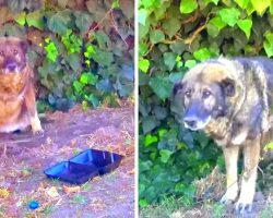 Horrible Owner Dumps Sick Senior Dog In A Park, Dog Cries As He Waits For Owner
