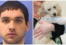 Man Who Threw Poodles Off Parkade Roof Gets Released From Prison