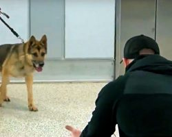 Military K-9 Steps Off Elevator & Sees His Handler For First Time In 3 Years