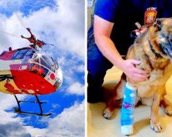 Cops Summon Medevac Helicopter To Save Gravely Injured K9 From Potential Death