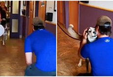 Lost For 3-Yrs, He Howls With Joy When He Sees His Dad Standing In Front Of Him