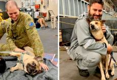 135 Dogs Who Escaped Australian Fires Find Refuge With Kind Soldiers On Navy Ship