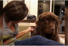 Newfoundland Is Upset With Owner And Finally Decides To Forgive Her