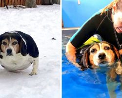 Sick Dog With Morbid Obesity Made New Year's Resolution To Lose Weight In 2019