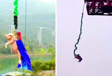 "Theme Park Shamelessly Forces Pig To Do A Bungee Jump, Call It ""Entertainment"""