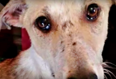 Pining For Family Who Left Him, Dog In Kill-Shelter Wept As They Passed Him By