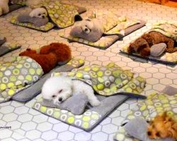 Doggie Daycare Posts Heart-Melting Pictures Of Their Puppies During Naptime