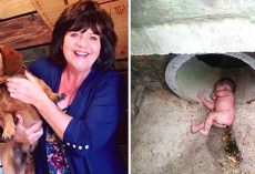 Rescued Dog Barks Nonstop At Storm Drain, Ended Up Saving An Abandoned Baby's Life