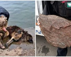 Cruel Humans Tied Heavy Rock To Senior Dog & Dumped Her In River To Drown