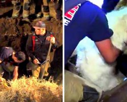 Firefighters Dig 50Ft Underground To Rescue 90-Pound Dog Stuck In A Storm Drain
