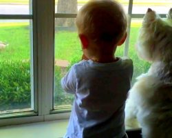 Baby & Dog Push Each Other In An Attempt To Get The Best View Of A Passing Duck