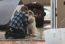 Dog And Owner Take A Moment After Tornado Tears Down Their Home