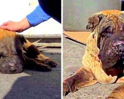 Kids Torture Old Dog With Firecrackers, Owner Kicks Poor Dog Out When He Cries