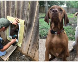 2 Neighbor Dogs Become Soulmates And Their Humans Install Fence Door So They Can Be Together