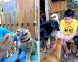 9-Year-Old Uses Up Pocket Money To Feed Homeless Dogs, Opened A 'No-Kill' Shelter