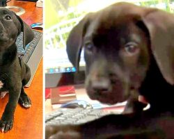 Rescue Puppy Volunteers As A Support Dog For Highly Stressed 911 Dispatchers
