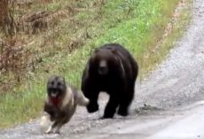 Owners Watch As Their Dog Returns From The Woods With A Bear Friend