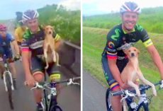 Cyclist Comes Across A Depressed Puppy Who Was Dumped In The Middle Of Nowhere