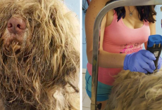 Dog Groomer Opens Shop In Middle Of Night To Give Stray Dog Haircut And Found Beauty Beneath Matted Fur