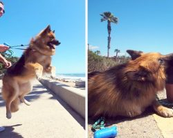 Dog On Chains His Whole Life Saw The Ocean For The First Time