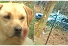 Teenager Watches In Horror As Car Creeps By Her House, Shoots Family Dog