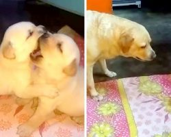 Mama Dog Schools Her Troublemaking Pups For Fighting Dirty & Talking Back At Her