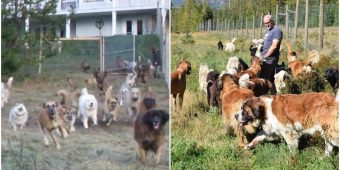 Man Adopted 45 Unwanted Shelter Dogs And Let Them Run Free For The First Time