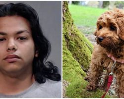 Sicko Hangs Puppy From Tree By Her Neck & Kills Her 'Because He Was Bored'