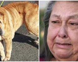 Animal Control Euthanizes Woman's Dog Just 3 Days After She Ran Away From Home