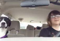 Mom And Dog Take A Car Ride, Break Into Song When Michael Jackson Plays On The Radio