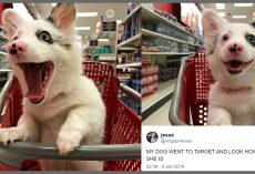 Mom Brought 4-Month Old Pup To Target, And His Photos Won Over The Internet