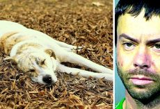 Man With 3 Prior Felonies Feeds Meth To Neighbor's Dogs, One Of The Dog Dies